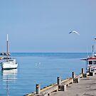 Beautiful Bicheno by the Sea by Jenni Greene