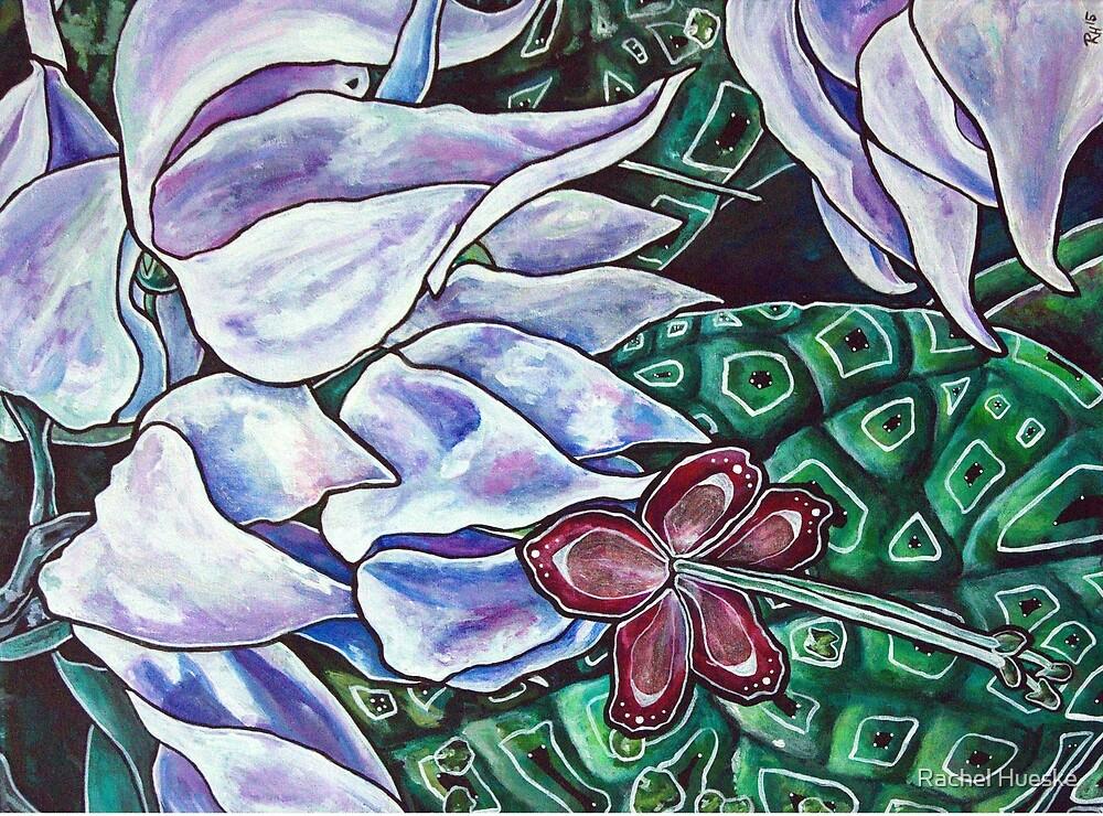 Bleeding Heart Vine by Rachel Hueske