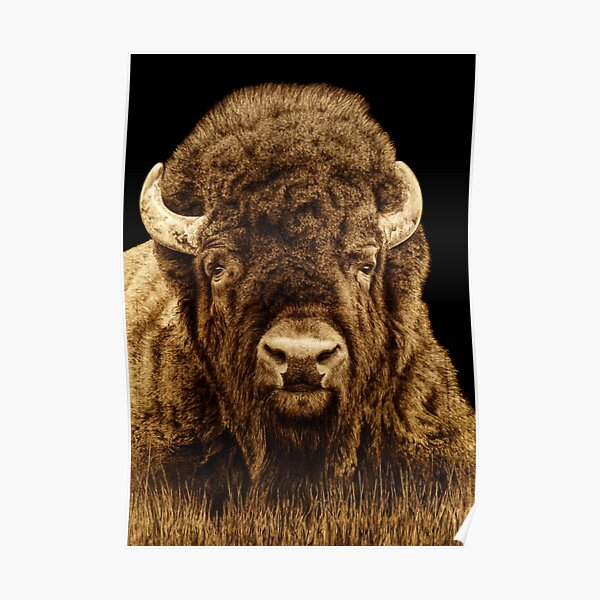 Bison Woodburning by Minisa Robinson Poster