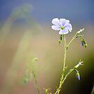 In the Blue by Jody Johnson