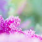 Pinkness III by iltby