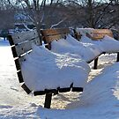 The Benches of Cantigny by Brian Gaynor