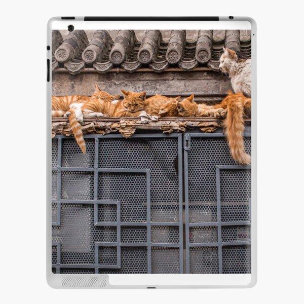 Un grupo de gatos manteniéndose caliente Vinilo para iPad