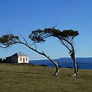 Windswept trees on Maria Island, Tasmania, Australia by PC1134