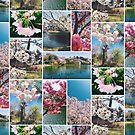 Beautiful Sakura Cherry Blossoms Park Pond Garden Spring by Beverly Claire Kaiya