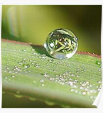 Dew Drop Poster