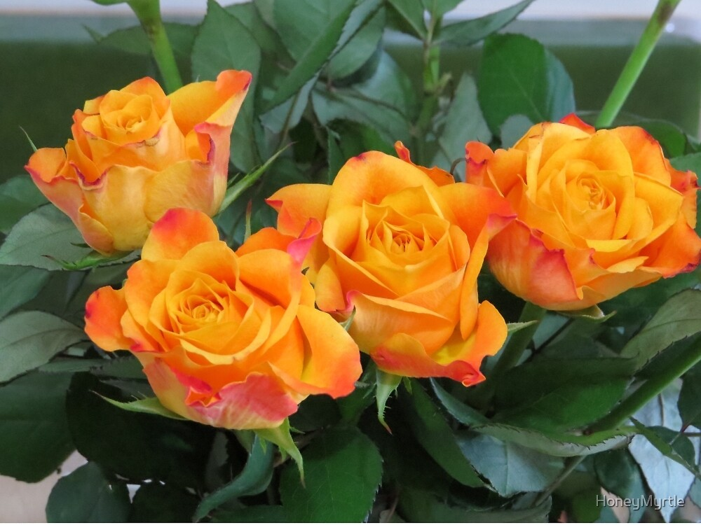 Yellow Roses by HoneyMyrtle