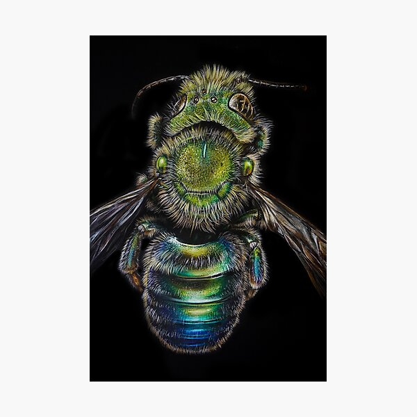 Osmia Metallic Bee Illustration Photographic Print