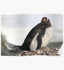 Gentoo Penguin With Chicks Poster