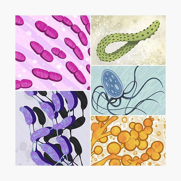 Infectious Diseases  Photographic Print