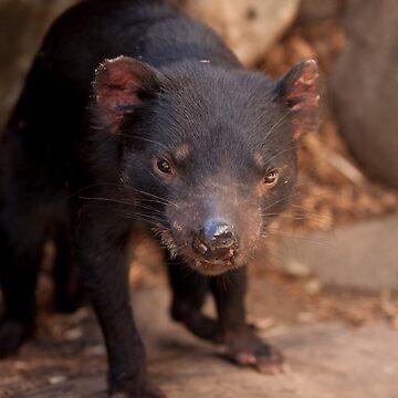 Tasmanian Devil by joffotron