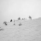trees in snow I by geophotographic