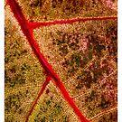 red leaf by a-bandomir