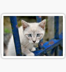 Kitten with blue eyes on the street Sticker