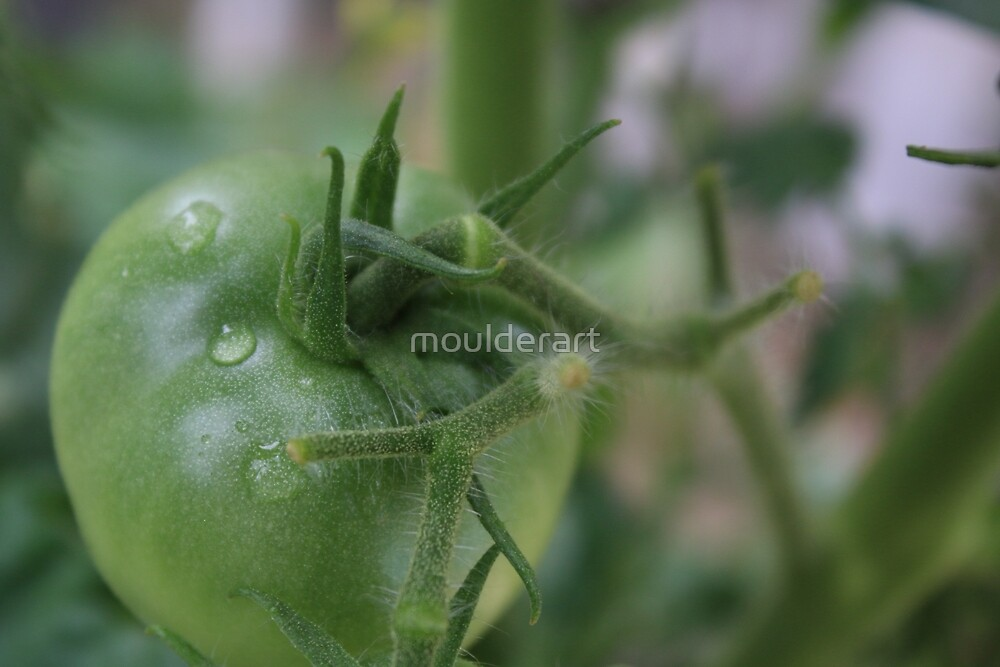 Green Tomato by moulderart