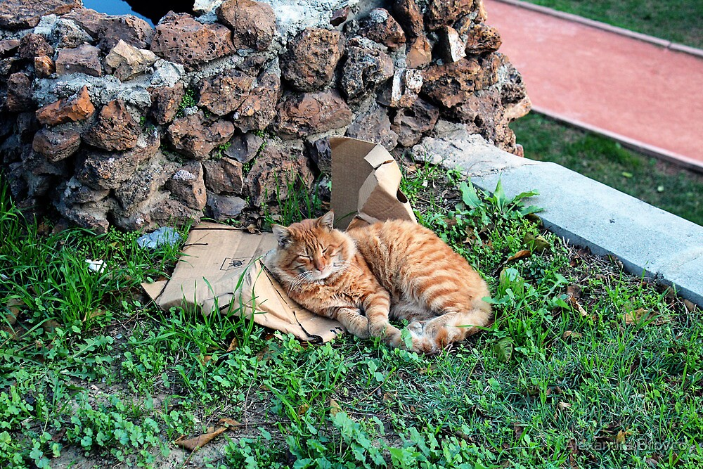 a red cat in istanbul. by Alexandra Brovco