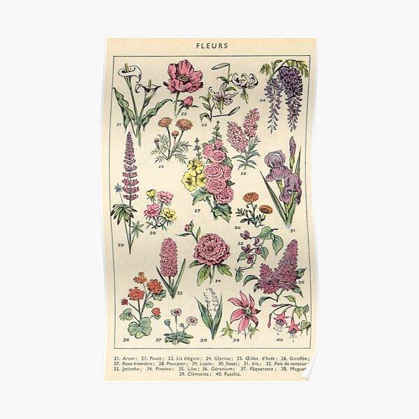 Les fleurs, affiche Poster