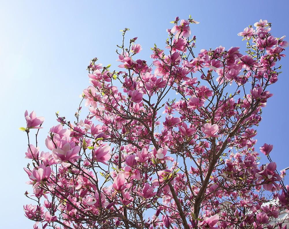 Spring by Aase