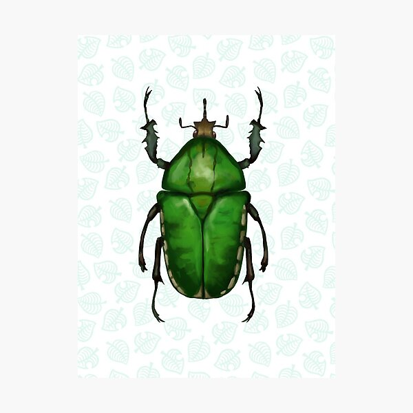 Animal Crossing - Flower Beetle Scientific Illustration Photographic Print