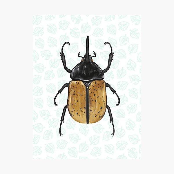 Animal Crossing - Hercules Beetle Scientific Illustration Photographic Print