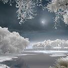 Winter Lake by Igor Zenin