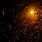 Streetlight Branches by Jono Hewitt