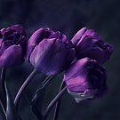 Dark Purple Tulips by Argos1
