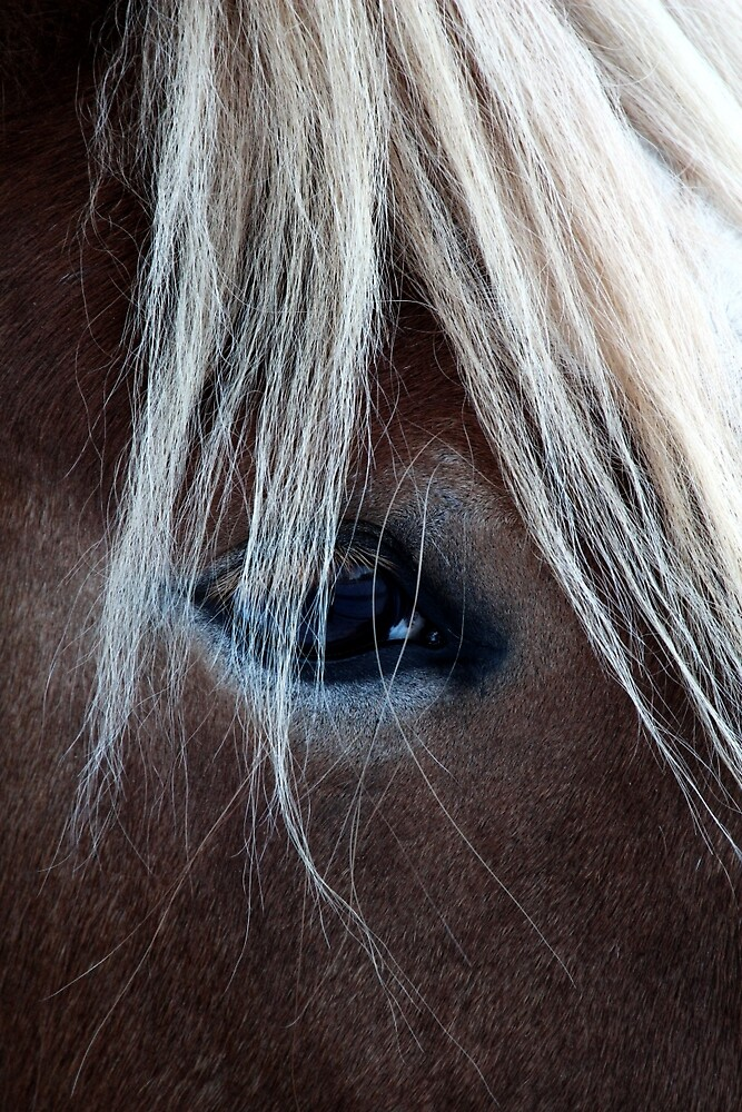 14.12.2015: Finnhorse's Look by Petri Volanen