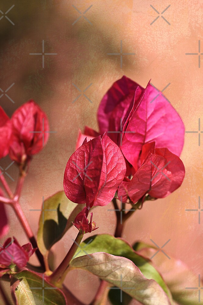 Warmth of Bougainvillea by Joy Watson