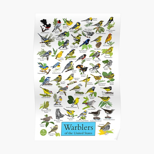 Warblers of the United States Poster