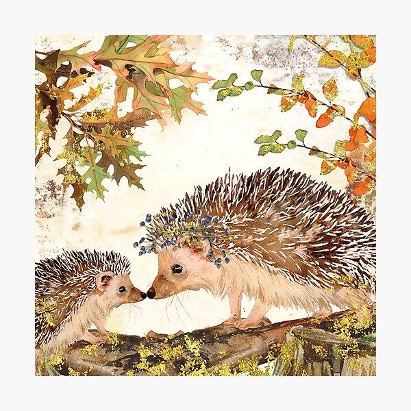 Fall Hedgehog Photographic Print
