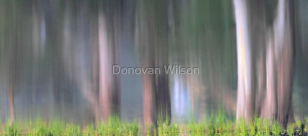 Forest Reflections . by Donovan Wilson