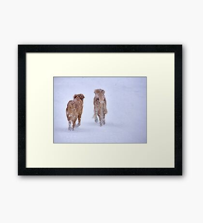 Romancing the snow Framed Print