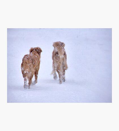 Romancing the snow Photographic Print