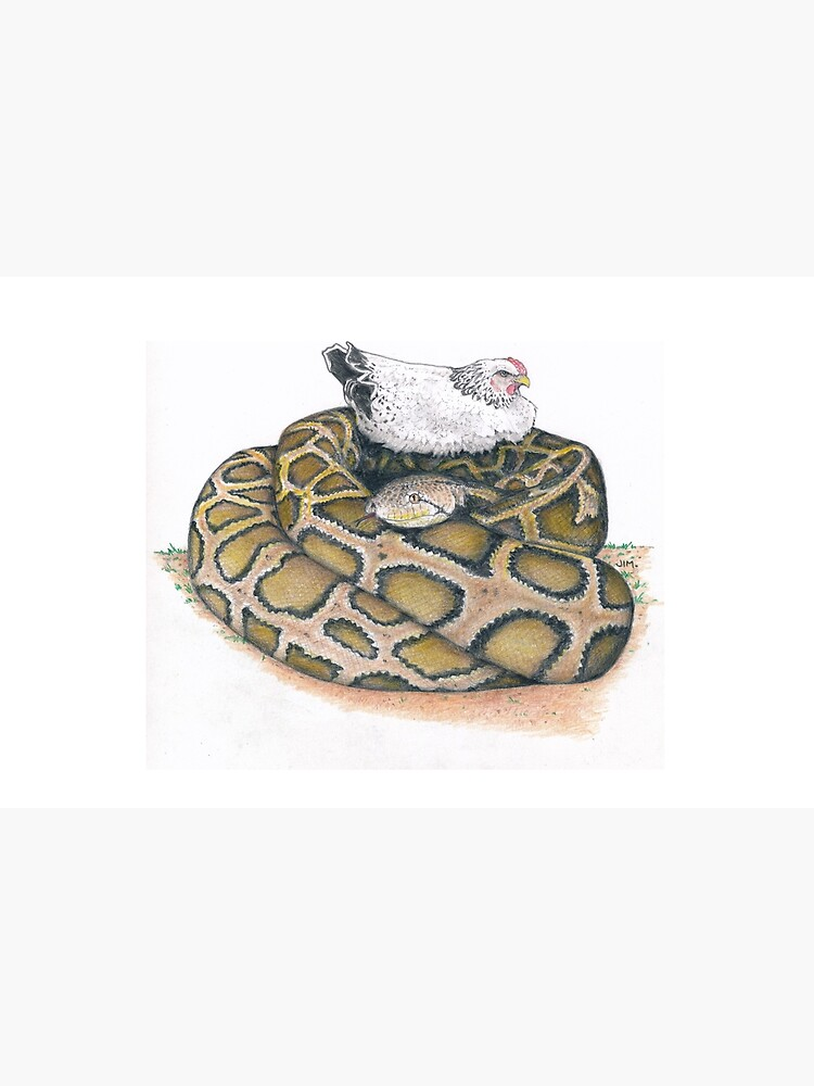 chicken on a python by JimsBirds