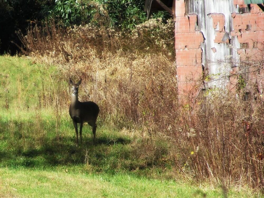 Deer in the woods by Dieselboutique