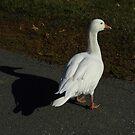 He Casts A Tall Shadow by WildestArt