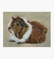 """Lucky"" Gorgeous Guinea Pig Photographic Print"