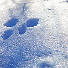 Rabbit Tracks by mwfoster
