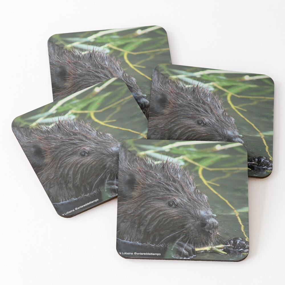 The hungry beaver By Yannis Lobaina Coasters (Set of 4)