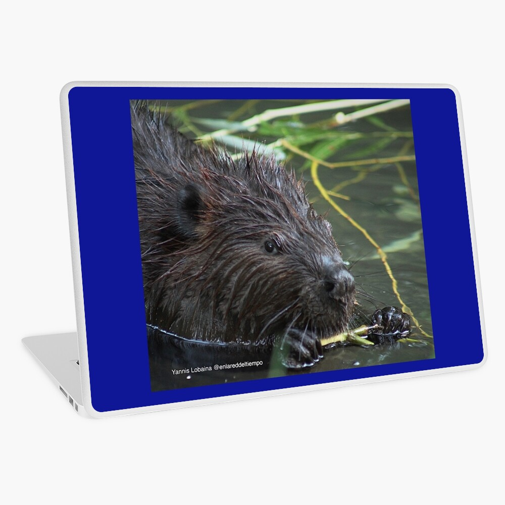 The hungry beaver By Yannis Lobaina Laptop Skin