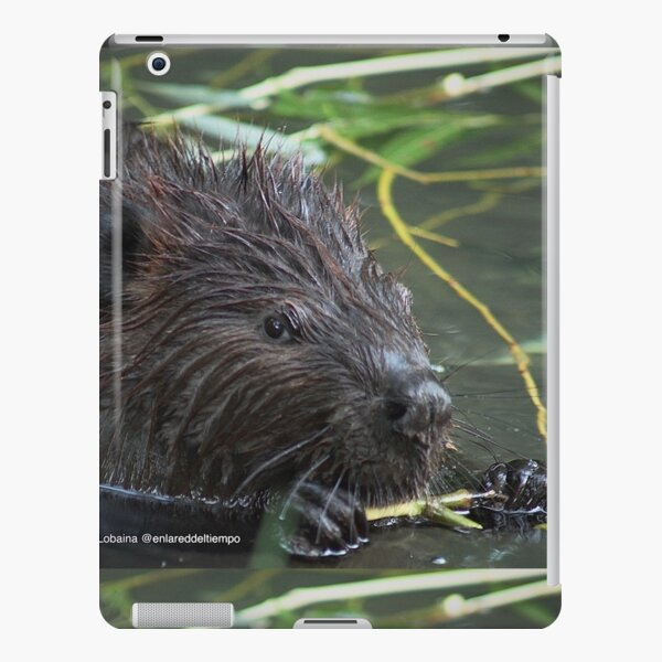 The hungry beaver By Yannis Lobaina iPad Snap Case