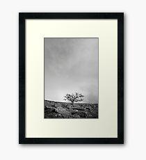 The Desolate Tree Framed Print