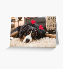 Bernese Mountain Dogs love Valentine's Day Greeting Card