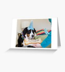 Bernese and the Birthday fun! Greeting Card