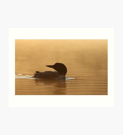 Common loon in morning light Art Print