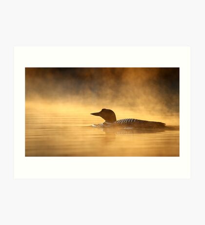 Into the Mist - Common Loon Art Print