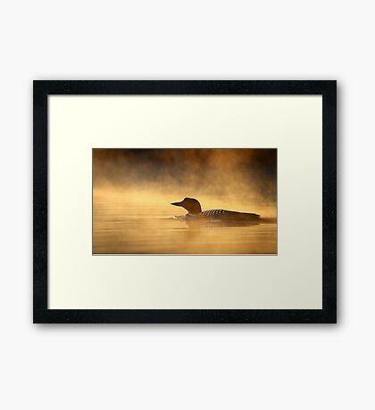 Into the Mist - Common Loon Framed Print