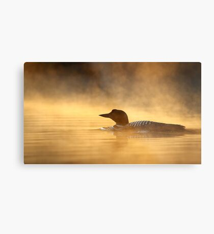 Into the Mist - Common Loon Metal Print