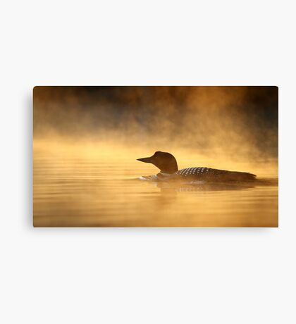 Into the Mist - Common Loon Canvas Print